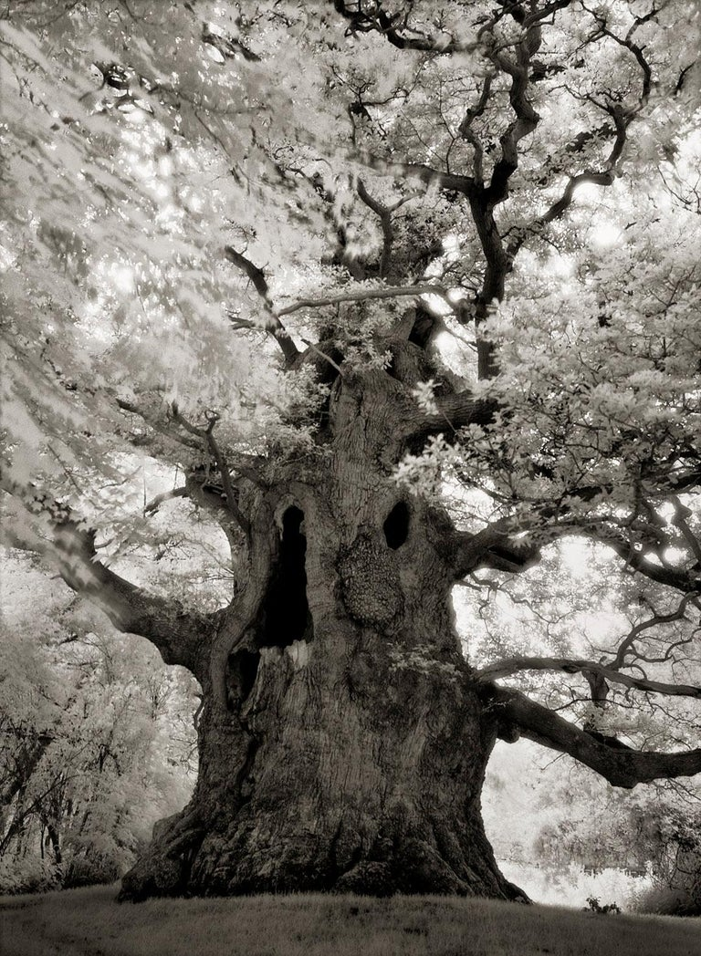 Beth Moon Black and White Photograph - Majesty