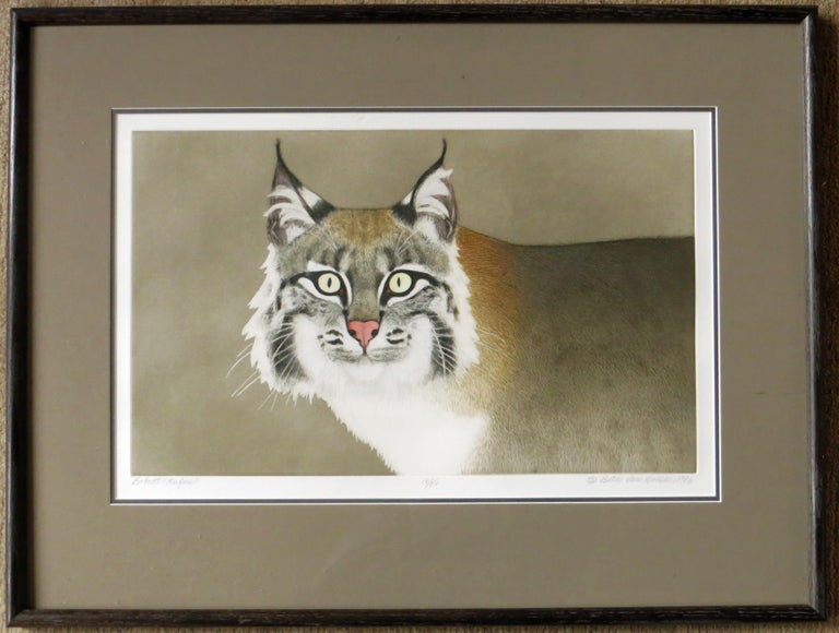 Bobcat (Rufus) - Print by Beth van Hoesen