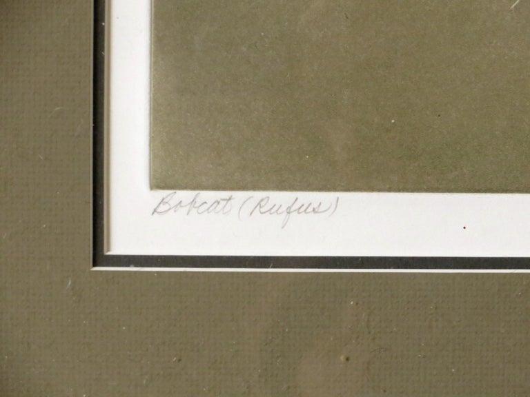 Bobcat (Rufus) - Brown Animal Print by Beth van Hoesen