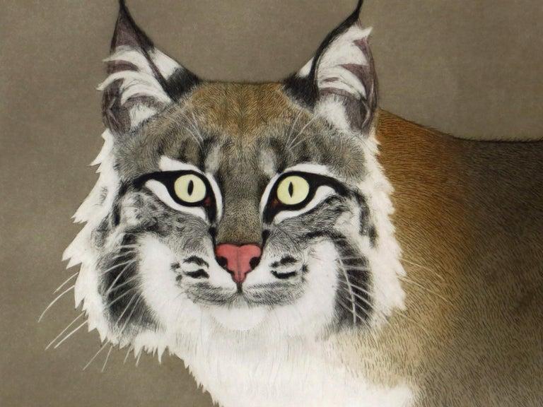 Bobcat (Rufus) For Sale 1