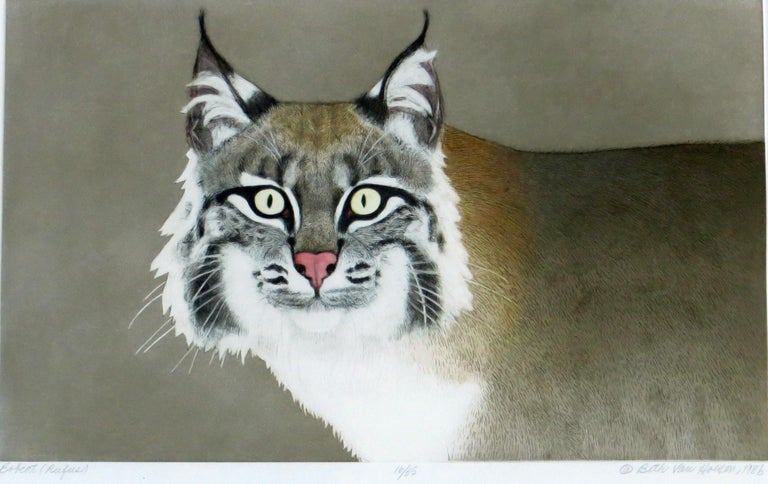 Bobcat (Rufus) For Sale 2