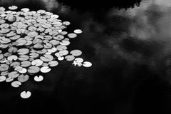 Dusk Lilies: Black & White Landscape Still Life Photograph of Water Lilies
