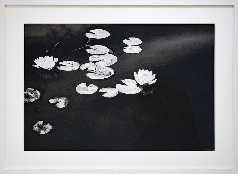 Minimalist landscape photograph of black and white waterlilies