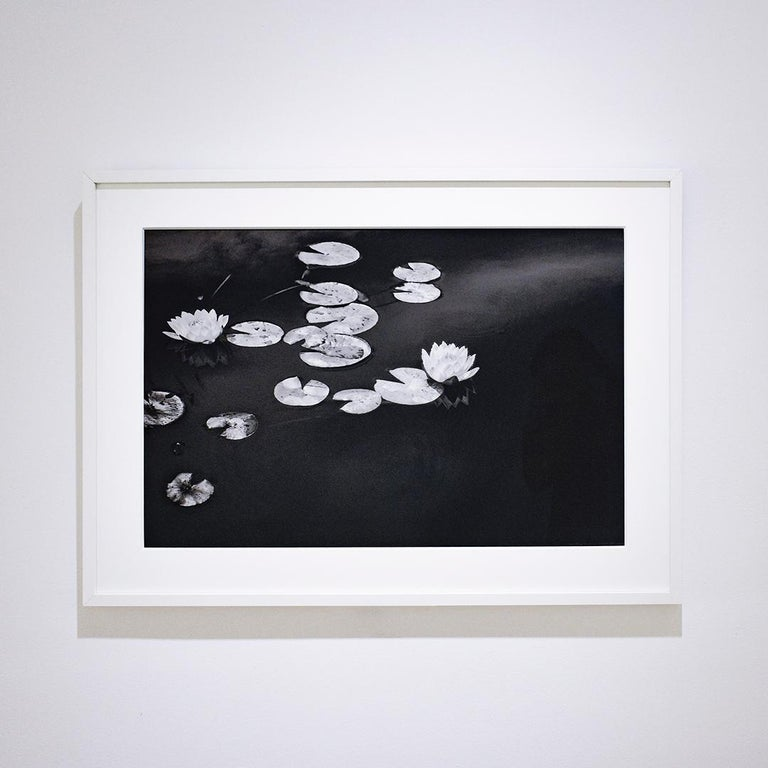 Summer Lilies (Realist Black & White Landscape Photograph of Botanicals) For Sale 1
