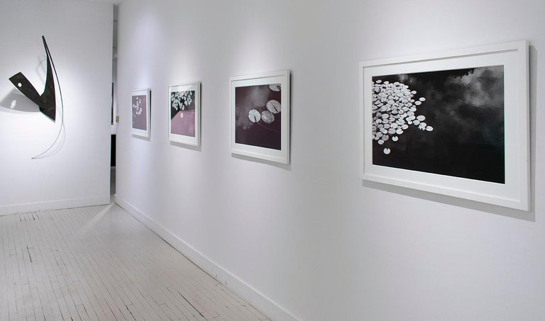 Summer Lilies (Realist Black & White Landscape Photograph of Botanicals) For Sale 5