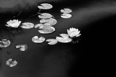 Summer Lilies: Black & White Still Life Landscape Photograph of Waterlilies