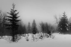 Trees and Mist (Black and White Landscape Photo of Forest in Winter in Finland)