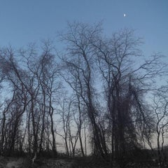 Trees and Moonlit Sky (Archival Inkjet Print on Watercolor Paper)