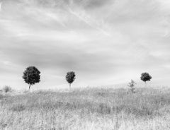 Trees in the Distance (Black and White Archival Inkjet Print of a Meadow)