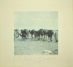 Camels in the Tunisian Desert - Original Photolithograph by Bettino Craxi - 1995