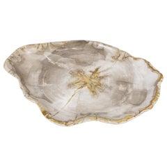 Big Petrified Wooden Plate in Beige Tones, Object or Accessory of Organic Origin