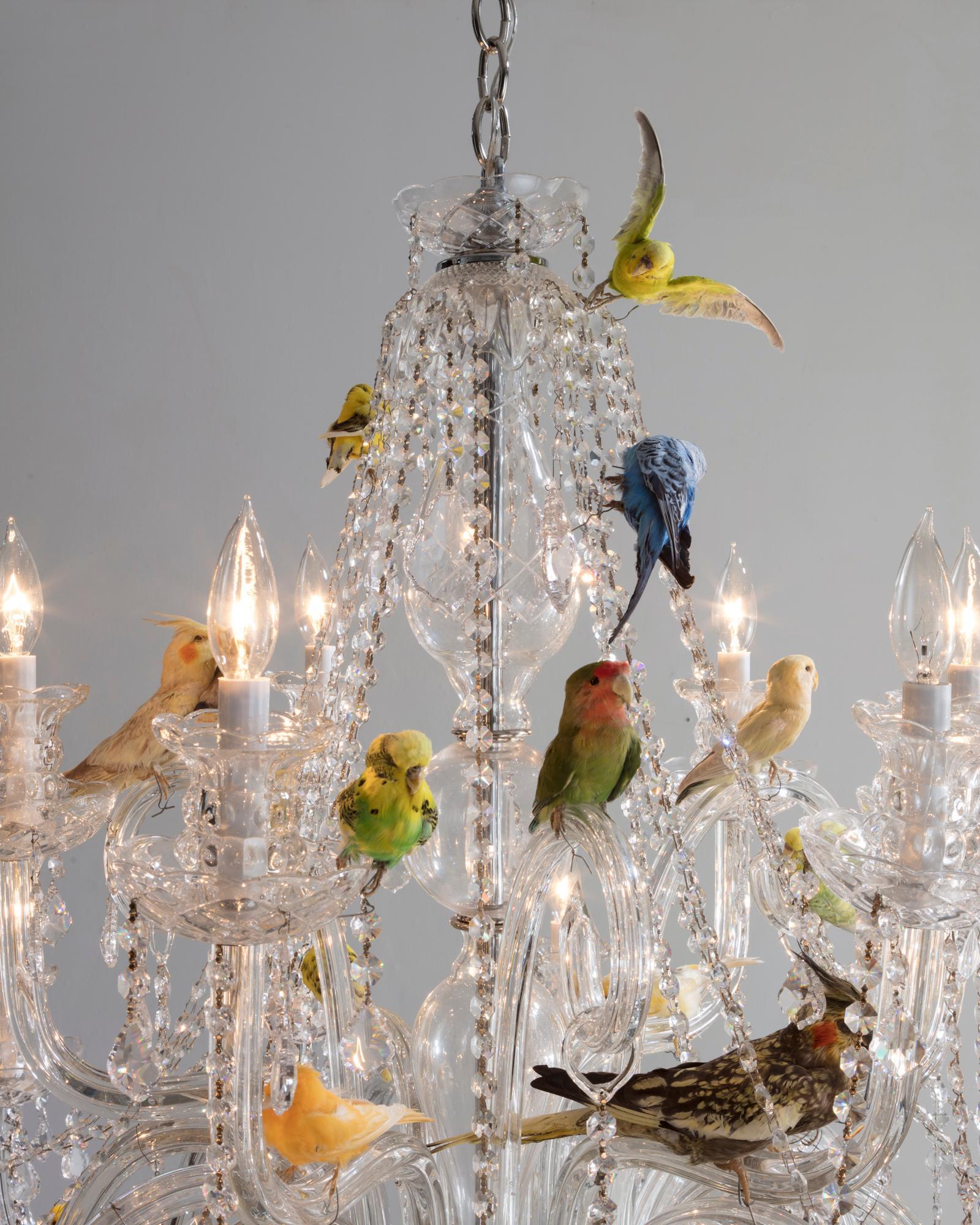 Bird Chandelier Crystal With Taxidermy Birds By