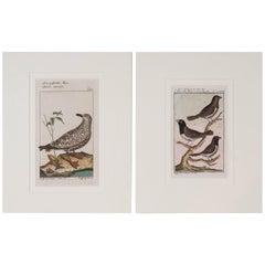 Bird Engravings on Paper Audubon Style by Francois-Nicolas Martinet   Group #1