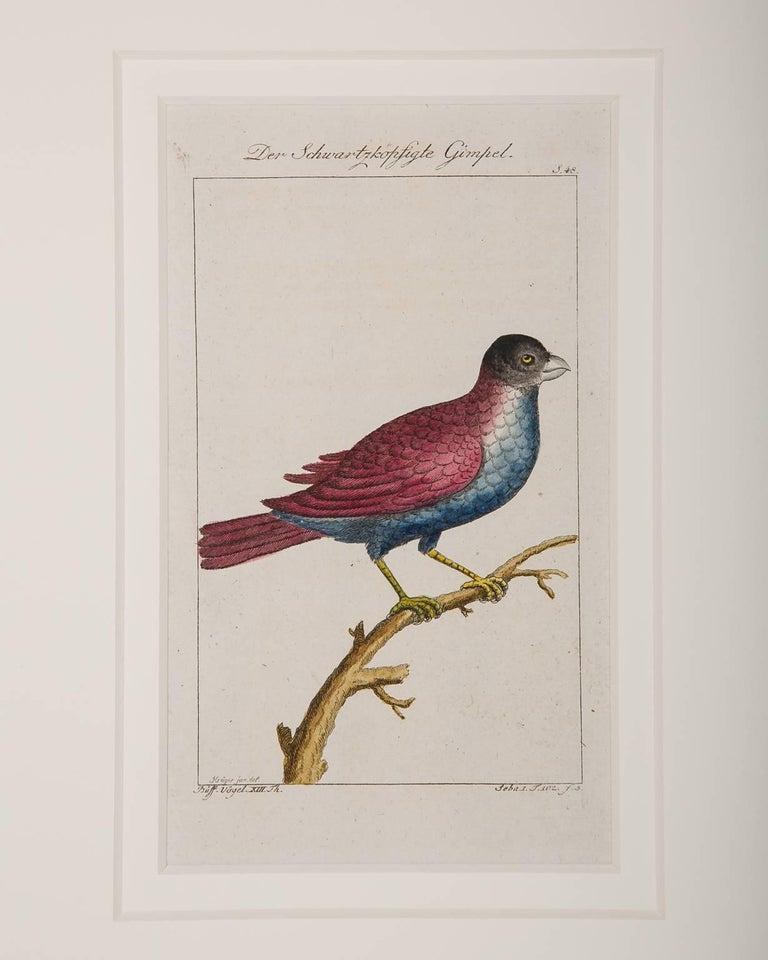 Bird Engravings on Paper Audubon Style by Francois-Nicolas Martinet  Group #2 4