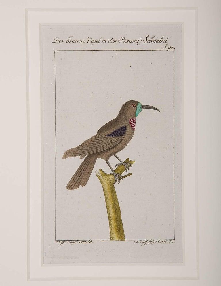 Bird Engravings on Paper Audubon Style by Francois-Nicolas Martinet  Group #2 5