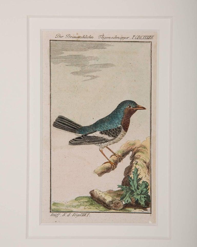 Bird Engravings on Paper Audubon Style by Francois-Nicolas Martinet  Group #2 6