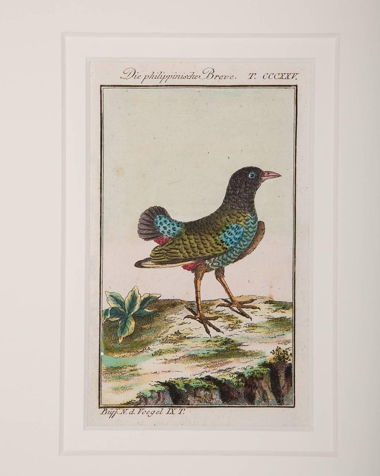 Bird Engravings on Paper Audubon Style by Francois-Nicolas Martinet  Group #2 7