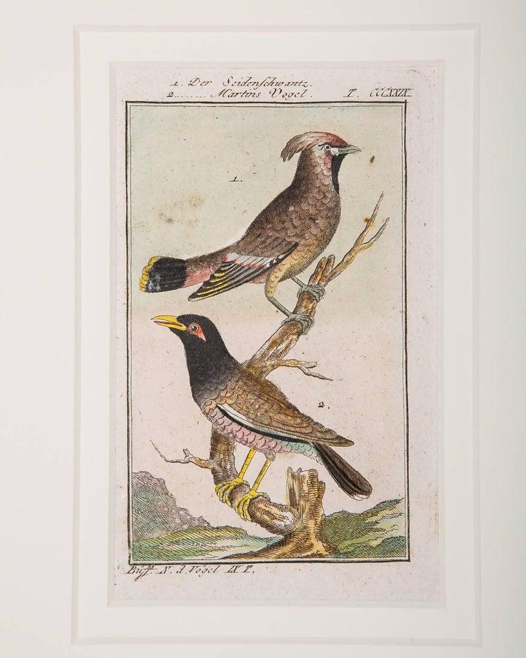 Bird Engravings on Paper Audubon Style by Francois-Nicolas Martinet  Group #2 8