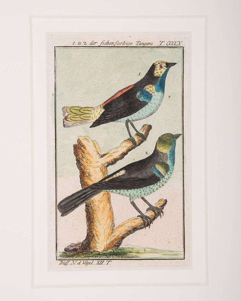 Hundreds of individual bird scenes captured on paper in the style of the Audubon bird engravings. These small, gem like, hand-colored engravings of birds represent the rare and compelling the ornithological drawings of the influential ornithologist,