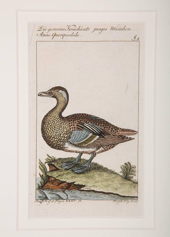 German Bird Engravings on Paper Audubon Style by Francois-Nicolas Martinet  Group #2
