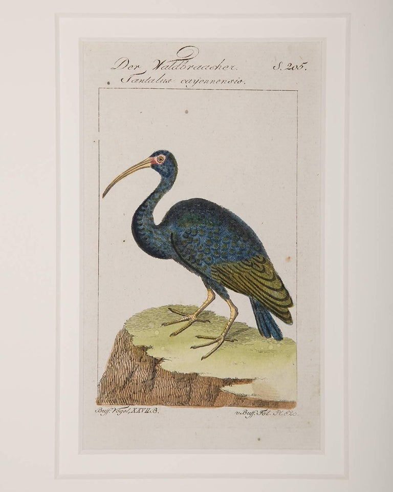 Engraved Bird Engravings on Paper Audubon Style by Francois-Nicolas Martinet  Group #2