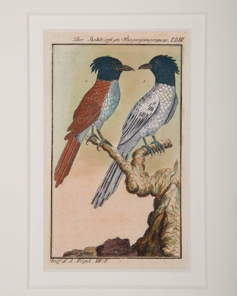 Bird Engravings on Paper Audubon Style by Francois-Nicolas Martinet  Group #2 In Excellent Condition In Katonah, NY