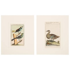 Bird Engravings on Paper Audubon Style by Francois-Nicolas Martinet  Group #2
