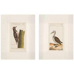 Bird Engravings on Paper Audubon Style Francois-Nicolas Martinet  Group #3