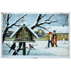 Birds in Winter, Vintage Wall Chart