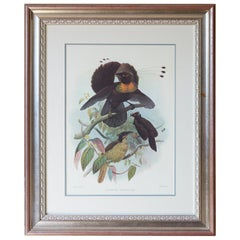 Birds of Paradise Ornithological Lithograph by Elliot