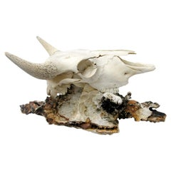 Bison Skull on a Fossil Agate Coral Decorated with Crystal Quartz Points