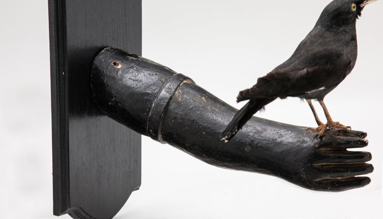 Black Bird Mounted on Antique Black Wood Arm In Excellent Condition For Sale In New York, NY