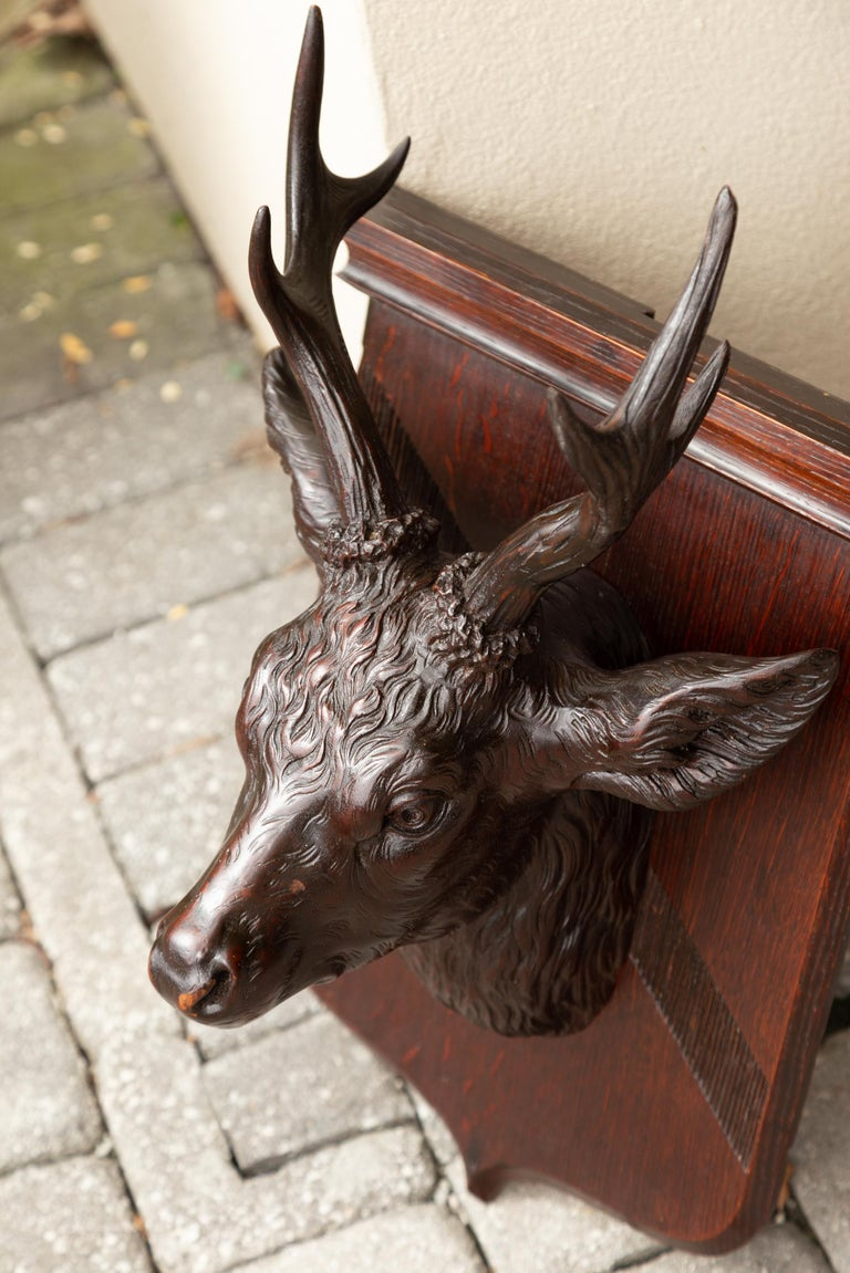 Black Forest 1900s Hand Carved Wooden Buck Head Mounted on Shield Plate For Sale 5