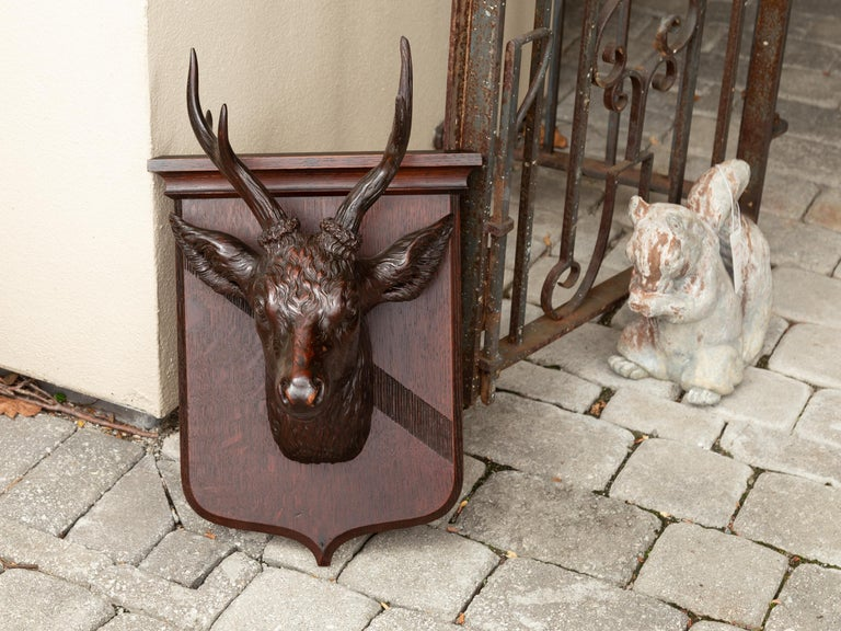 A Swiss Black Forest hand carved wooden buck head wall sculpture from the turn of the century, with shield plate. Born in the early years of the 20th century, this exquisite wall sculpture depicts a carved buck mounted on a shield-shaped plate. Our