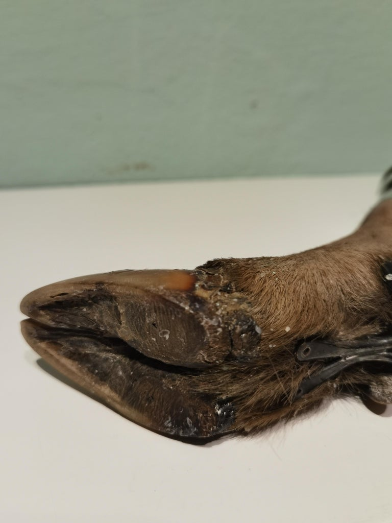 20th Century Black Forest Candleholder Silver with Deer Foot For Sale