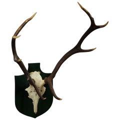 Black Forest Deer Trophy from Palace Salem, Spain, 1984