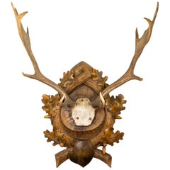 Black Forest Fallow Deer Trophy Mount