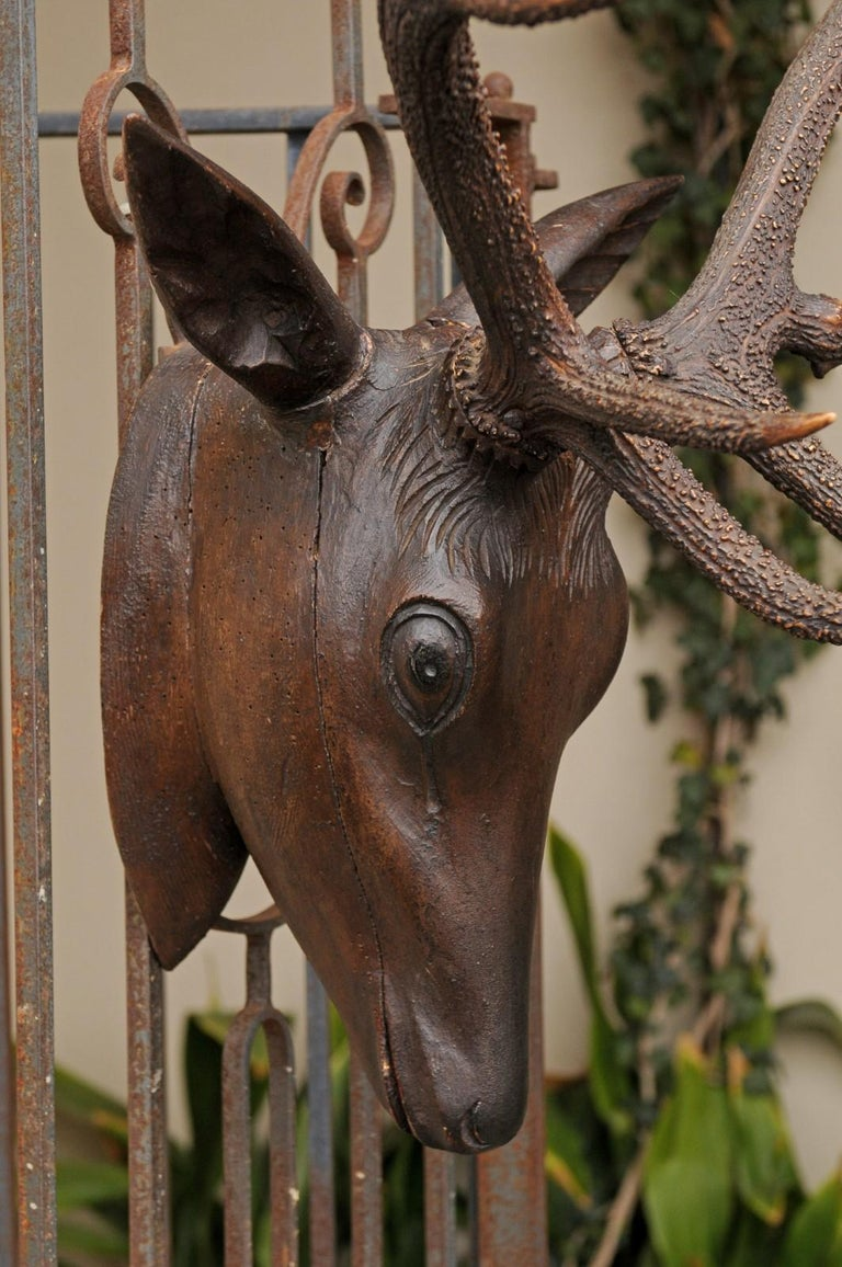 Black Forest Hand Carved Wood Stag Head, circa 1920 with Authentic Antlers For Sale 3
