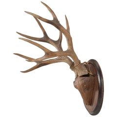 Black Forest Style Carved Wooden Stag Head with Real Antlers Mounted