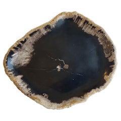 Black Petrified Wood Plate, Indonesia, Prehistoric