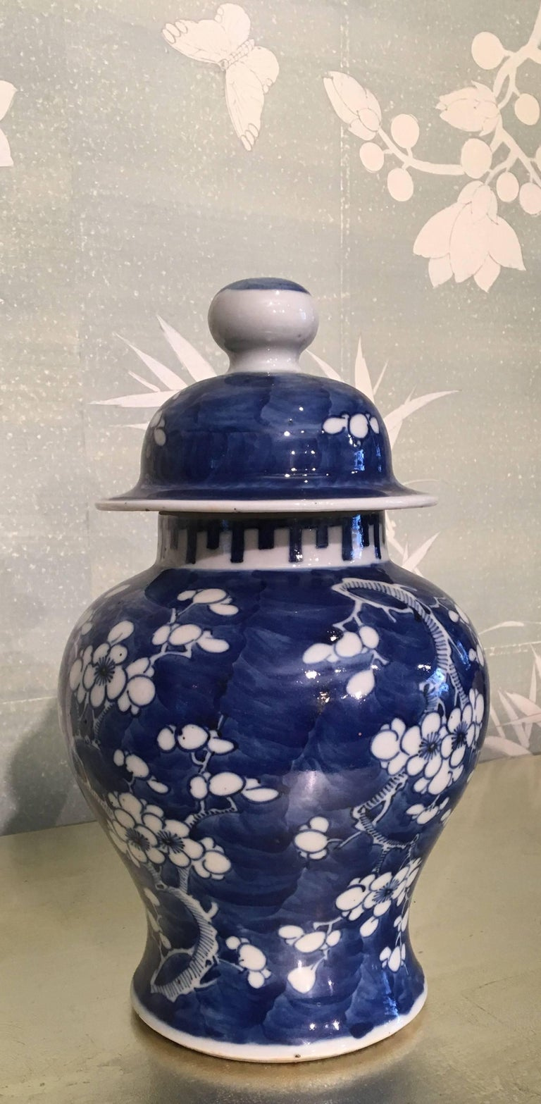 A Chinese 19th century blue and white temple jar with prunus blossom design.