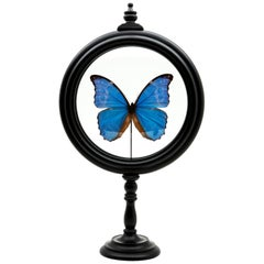 Blue Butterfly in Round Reliquary