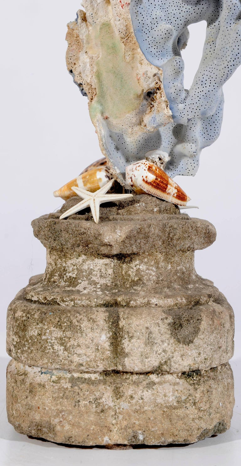 Blue Coral  madrepora mounted like a natural sculpture on an ancient stone capital, completed with some shells. O/7895.