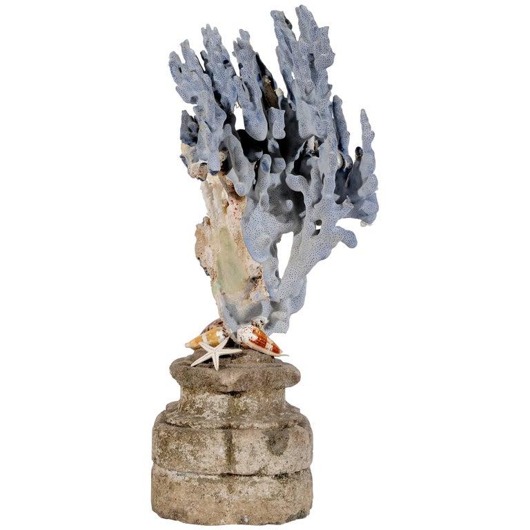Blue Coral Madrepora Natural Sculpture on a Stone Capitel For Sale