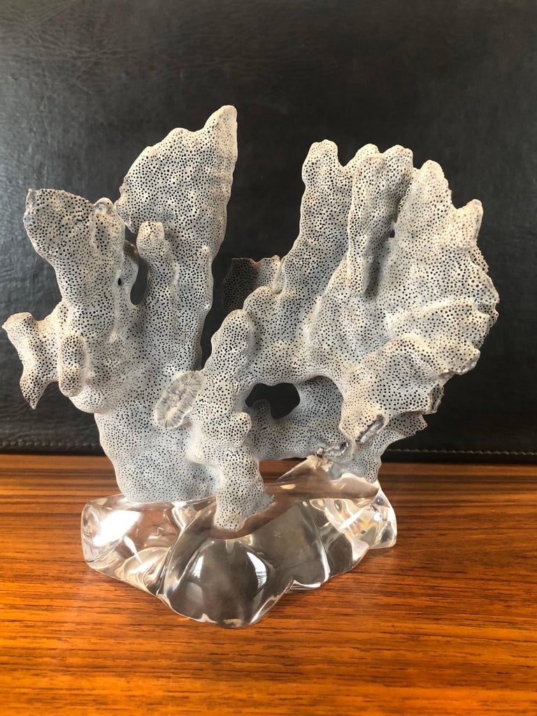 A beautiful blue coral organic specimen mounted on a solid 1.5