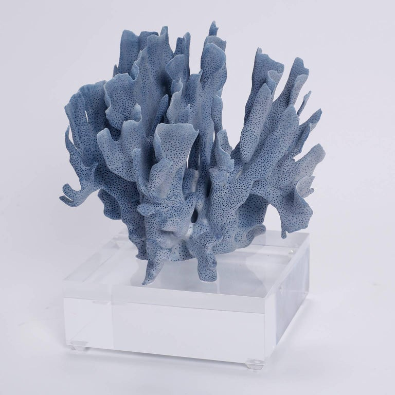 Solomon Islands Blue Coral Sculptures on Lucite, Priced Individually For Sale