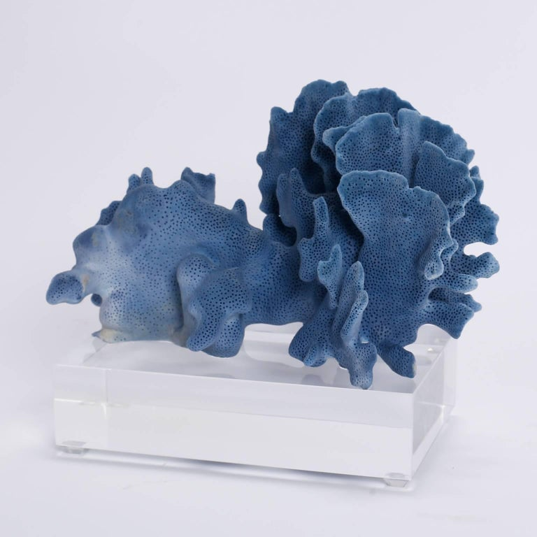 Contemporary Blue Coral Sculptures on Lucite, Priced Individually For Sale
