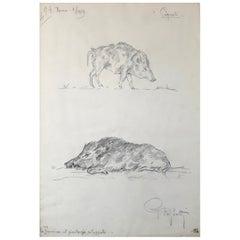 Boar Drawing, Guido Righetti, 1919