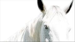 Horse Portrait 27