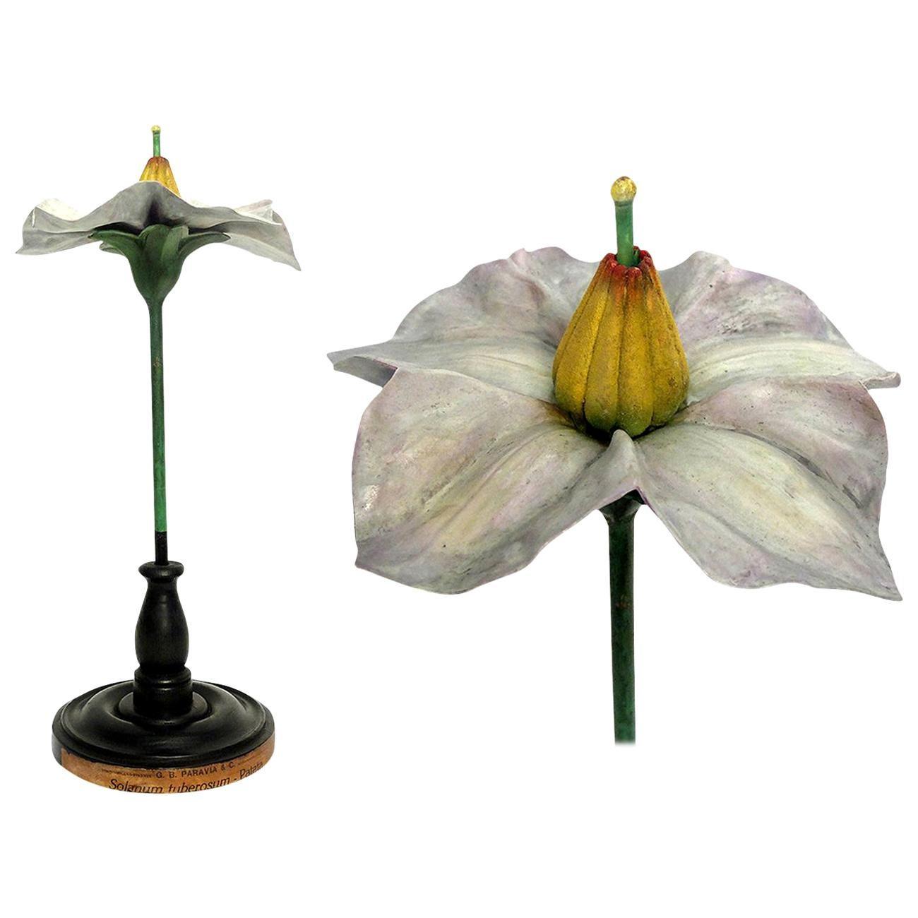 Botanic Flower Model, Milan Paravia, circa 1900